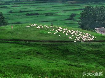 恋山坝上草原