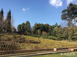 【昆明】秋高气爽天 去公园看那色彩斑斓