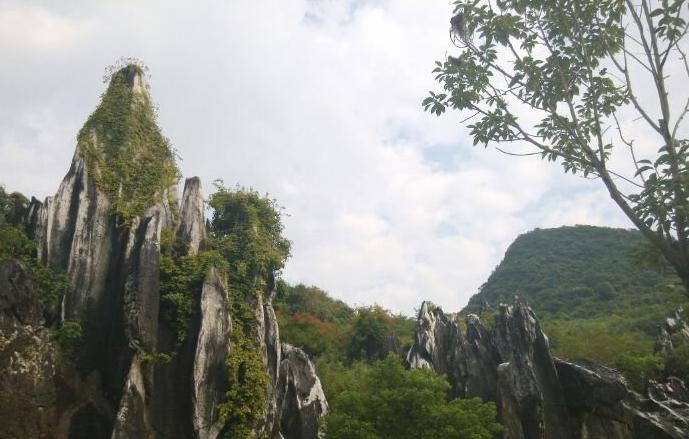 森林度假酒店 姑婆山森林公园/贺州温泉/玉石林风景区