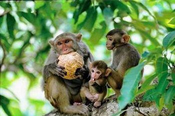 【陵水县】南湾猴岛生态旅游区-美团