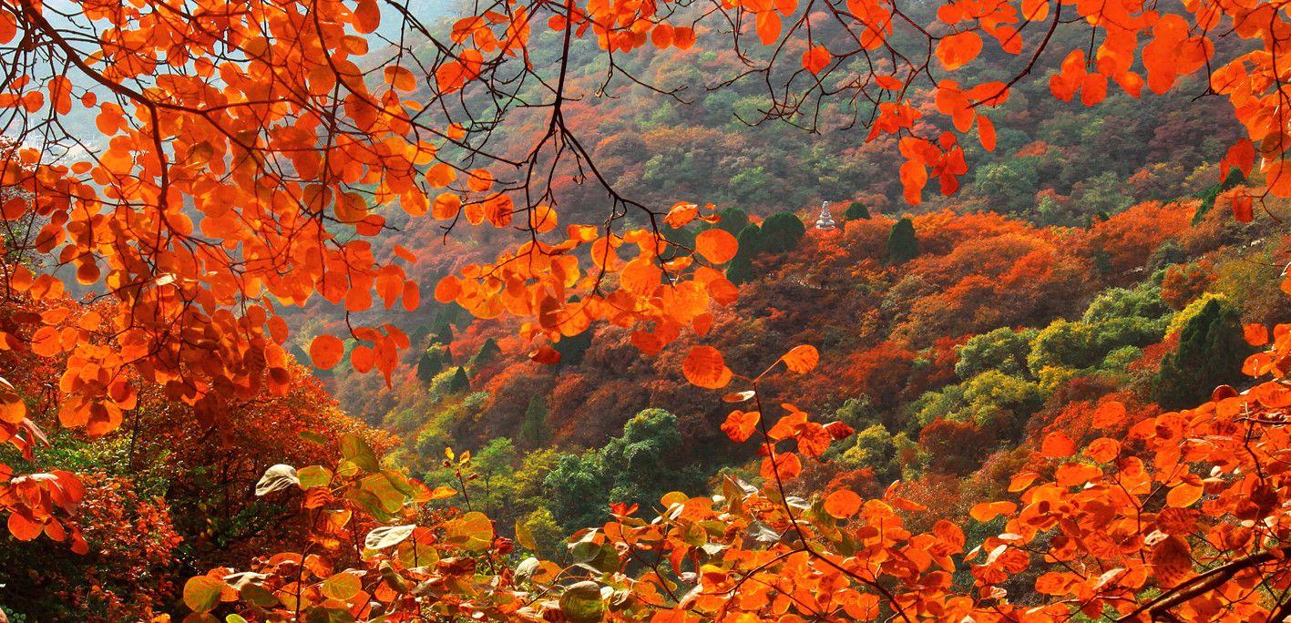 石门坊风景区有天然的黄栌滋生,每值深秋,黄栌红叶遍布山岗峡谷,如火