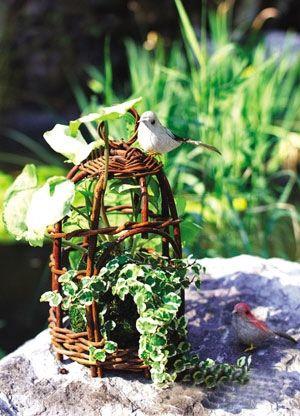 景观装饰 最适合室内摆放的植物图片