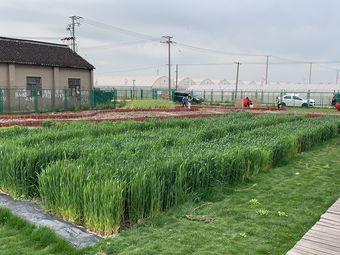 上海木然農場
