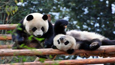 【成都等】成都途家斯维登服务公寓(米娅中心)1晚+双人大熊猫繁育研究基地+芙蓉国粹变脸-美团