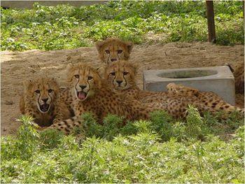 【上海等】上海大众空港宾馆1晚+双人上海野生动物园门票-美团