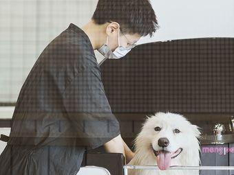DOG CLUB狗狗俱乐部(月湖店)