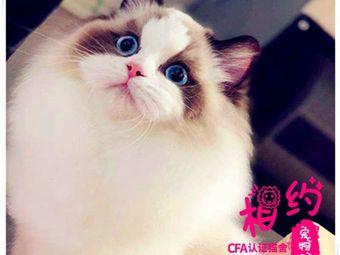 成都猫舍喵言猫语宠物猫繁殖(喵言猫语连锁猫舍)