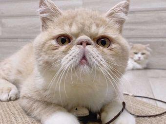 胖纠猫咖·猫舍