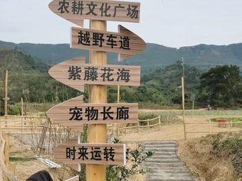 清泉山庄康颐佳生态农业园无花果采摘园