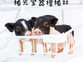 猪光宝器撸猪社