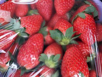 莓好草莓农场