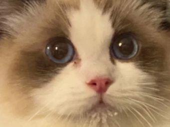 猫撸撸布偶体验馆·Switch PS5 电玩