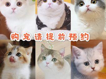 猫大仁·曼基康矮脚猫舍