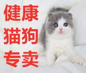 长沙购宠·大型宠物基地·妙旺犬舍猫舍总部