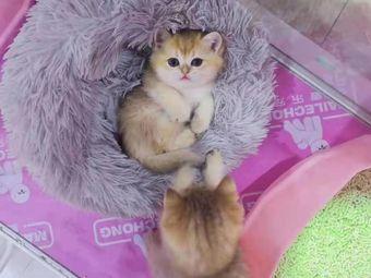 麦乐宠猫狗专卖.撸猫.撸柯尔鸭(石景山店)