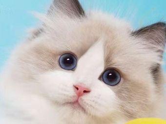 有猫宠物·猫•兔洗护·售卖
