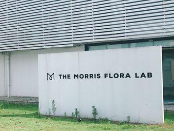 Morris 莫里斯花园