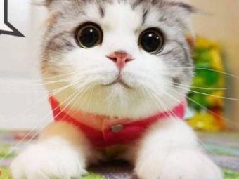 可爱多猫咖