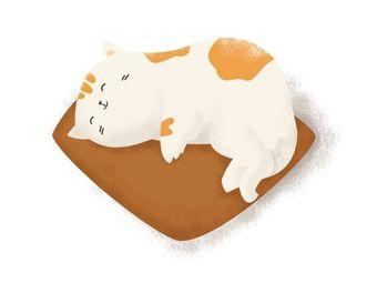 大吉猫屋•精品猫专售