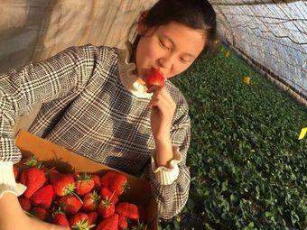大清九九草莓樱桃采摘园
