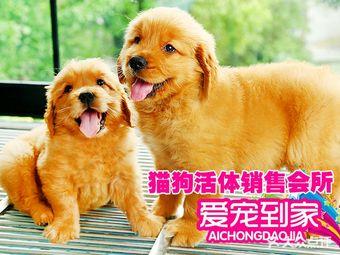 猫狗宠物活体销售犬舍爱宠到家