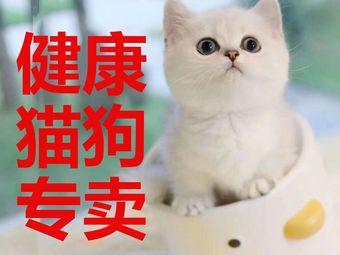 爱豆宠物(华阳店)