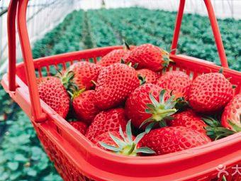 尚乐奶油草莓采摘庄园