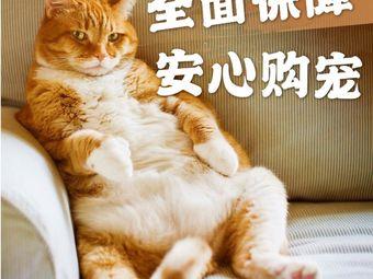 蹦蹦喵•CFA猫舍•宠物猫专卖