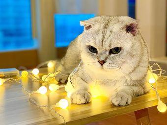 猫宿猫咖·法斗·波尔羊驼·安哥拉兔