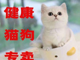 爱豆宠物(宠物猫犬活体专卖)(华阳店)