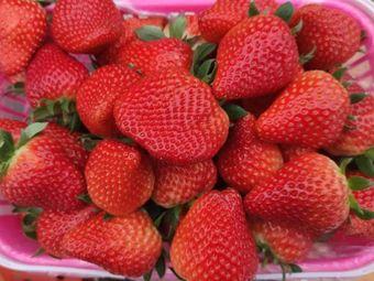 万盛草莓基地