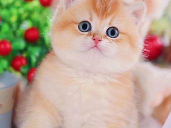 喵星人猫舍の猫咪专卖店(宠物猫店)