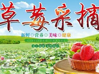 草莓采摘天旺园