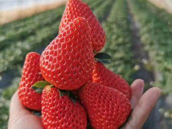 一品甜奶油草莓采摘園