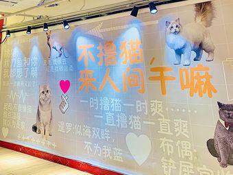遇喜·猫墅撸猫馆(中山路店)