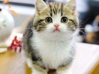 喜猫宠物猫舍生活馆