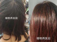 养发师植物养发的图片