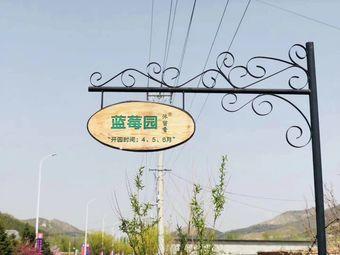 沐留香蓝莓园