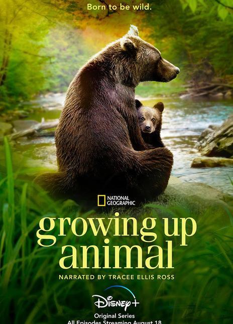 动物成长全6集 2021自然纪录片.HD1080P.英语中字