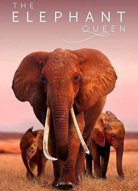2018 肯尼亞《大象女王》多倫多國際電影節