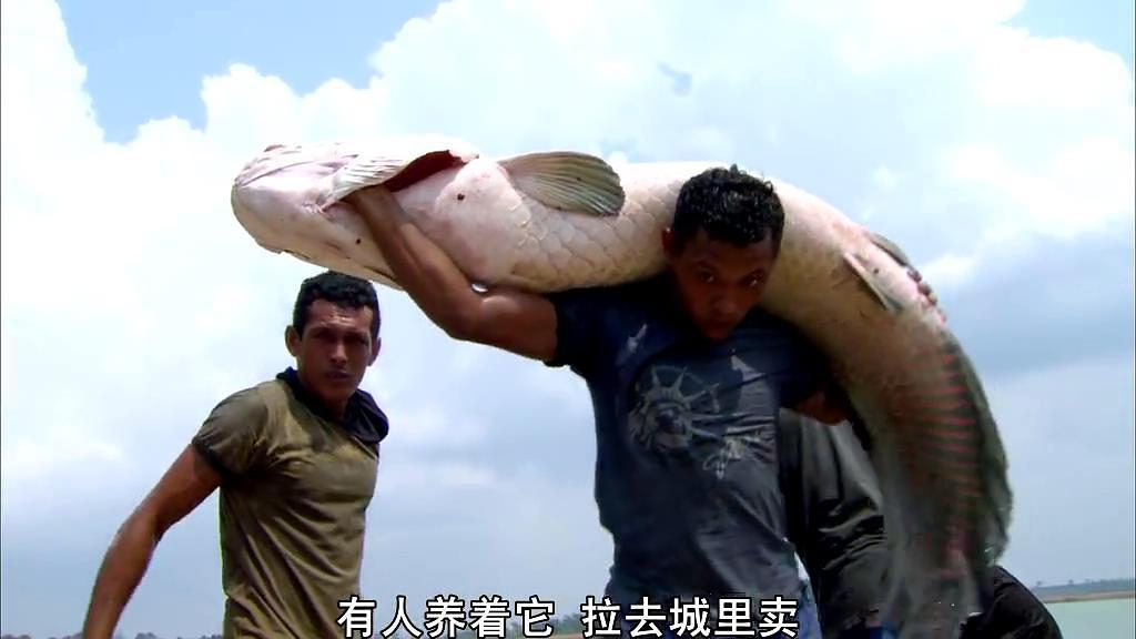 2010纪录片《亚马逊之泪》BD1080P 高清迅雷下载