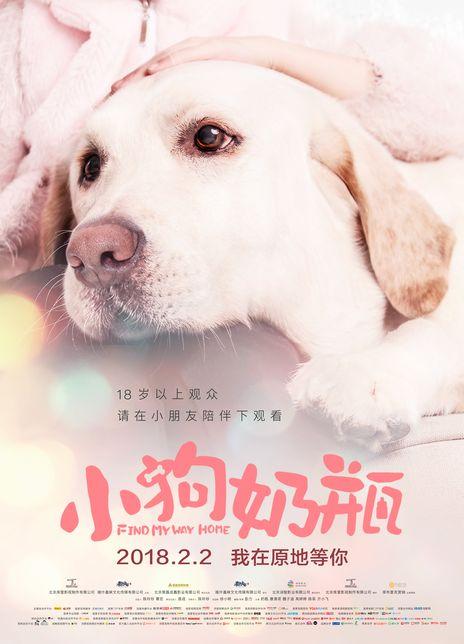 2018剧情《小狗奶瓶》豆瓣6.0又一感人狗狗电影