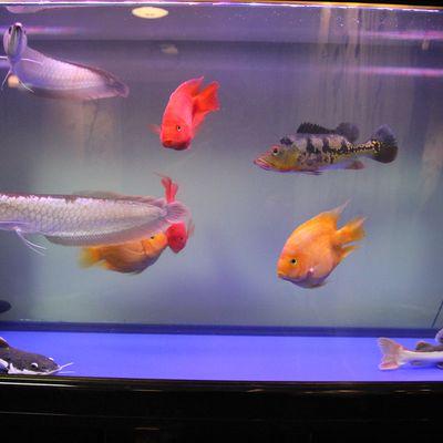 可爱的鱼们纹身图
